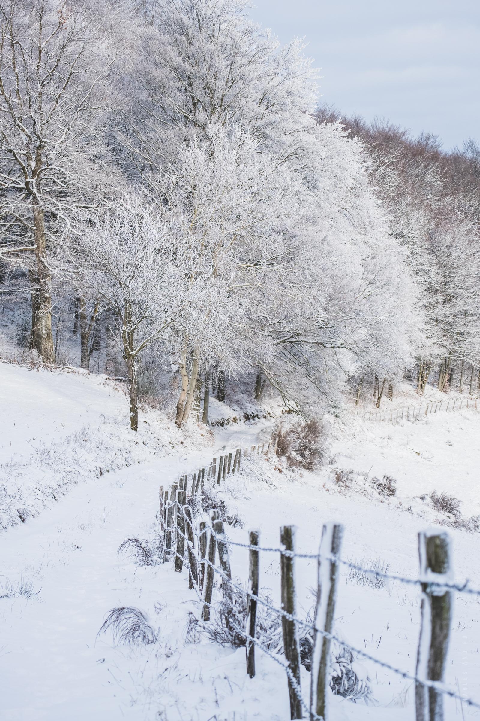 Photographe close-up et nature lyon - chemin de neige en hiver à Yzeron